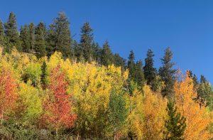 fall colors in Breckenridge